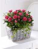 trandafiri-2