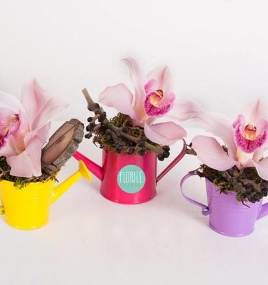 Orhidee in stropitoare